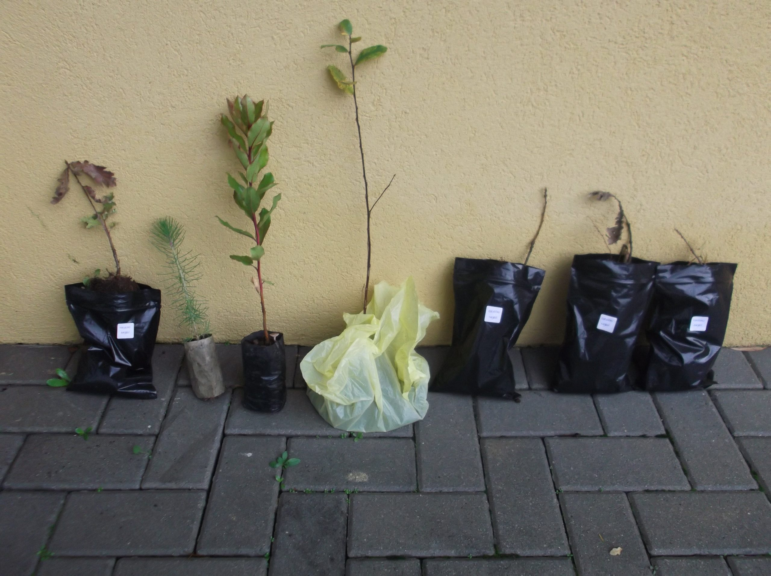 Think and Create your Own Hobbies - Portugal - Reforestation